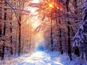 sunny winter day wallpaper