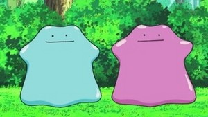 The two (and different-colored) Dittos