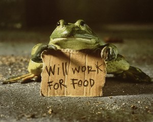 frog says will work for food