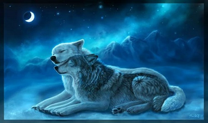 Mbwa mwitu loups In The Moonlight <3