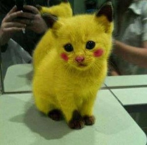 Cat made to look like Pikachu