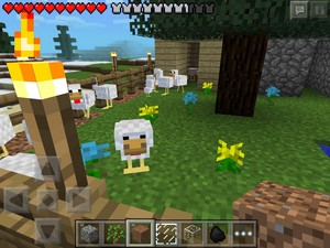 My chicken farm