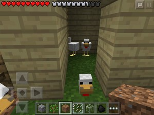My chicken farm laying house