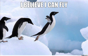 manchot, pingouin believe He can Fly.