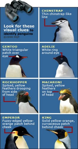 Penguins Identify.