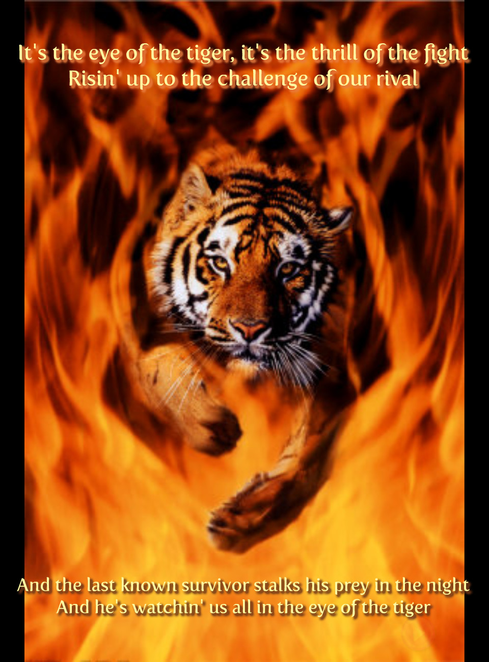 It S The Eye Of The Tiger Tigers Photo 37465600 Fanpop