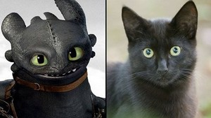 Toothless and My Cat