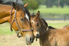 cute horse and foal