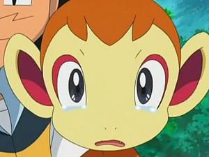 chimchar crying