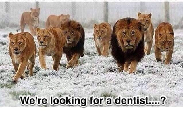 Lions on the hunt...for a dentist