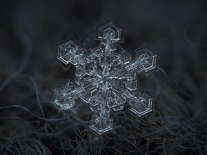 snow crystal
