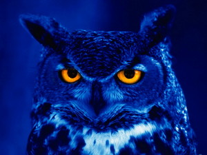 Owl in Blue Light