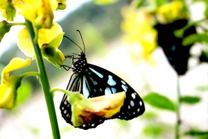 fragrant nature butterfly 1080x720  1