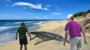 pliosaur sighting gambian sea monster 768x430