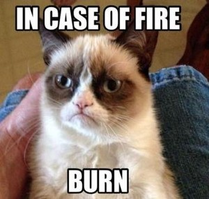 Best funny grumpy cat meme hilarious pictures have a laugh LOL laughing time 13