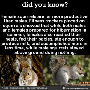 Productive Squirrels