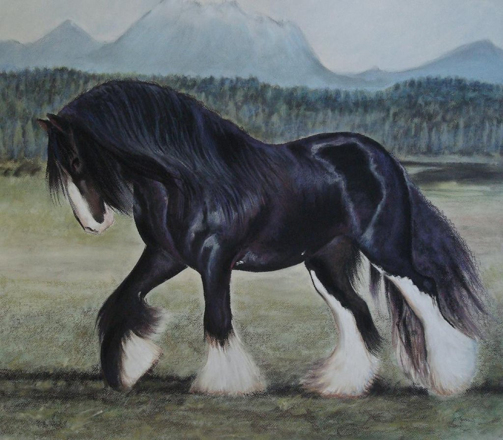Beautiful Shire Horse Artwork