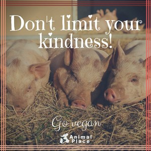 Don't  Your Kindness
