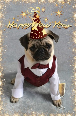 Pug Happy New tahun