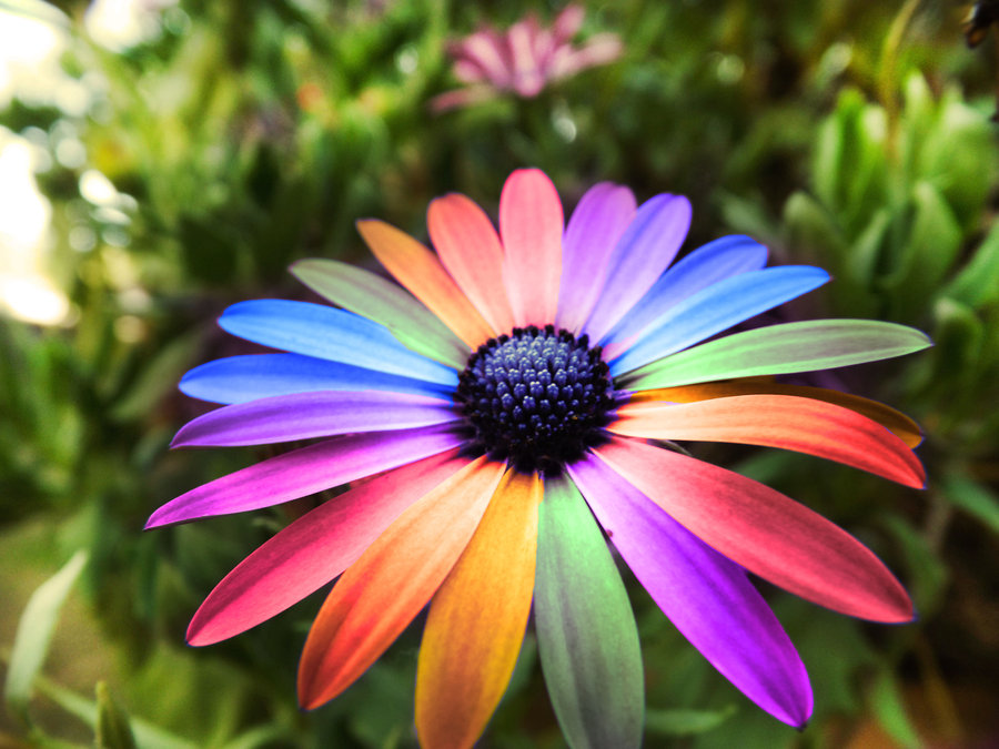 Bright Colors Images Rainbow Flowers Hd Wallpaper And Background Photos