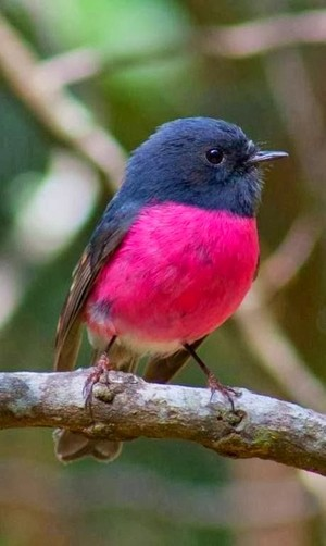 Pretty Little Bird