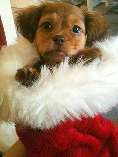 Christmas themed puppy pics