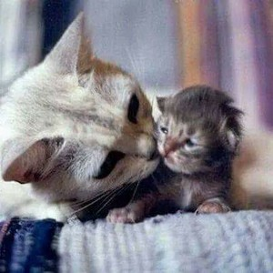 MOMMY Kucing WITH BABY anak kucing