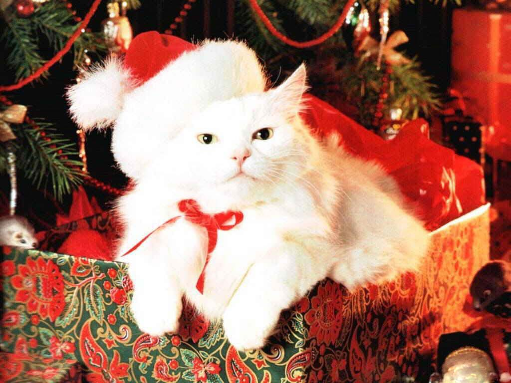 cute kittens images merry kittymas hd wallpaper and background