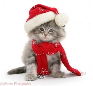 cute gattini wearing Natale hats