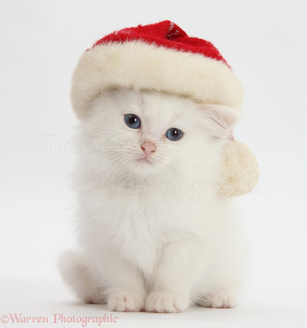 cute kittens images cute kittens wearing christmas hats hd wallpaper