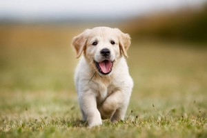 why we love puppies