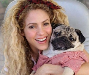 Famous Singer Shakira With A Pug
