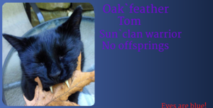 Oak`Feather