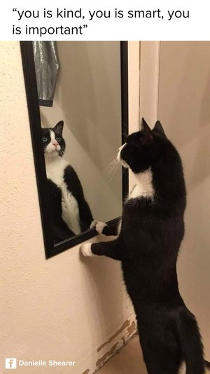 Кошки IN THE MIRROR
