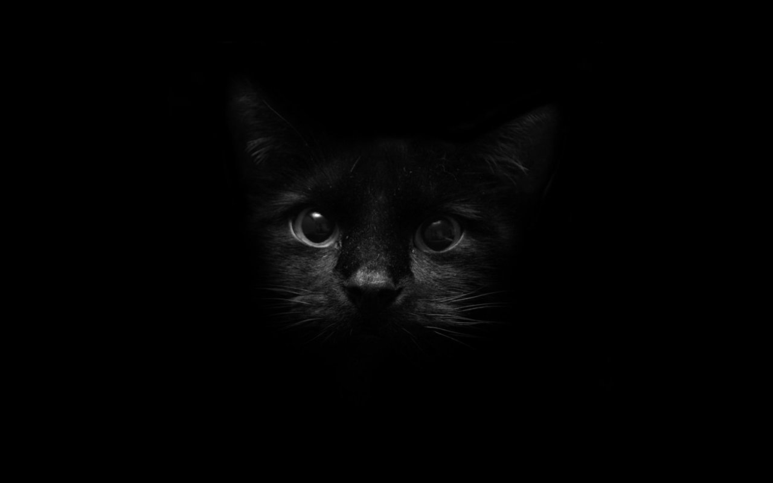 Beautiful Black Cat Cats Wallpaper 41241436 Fanpop