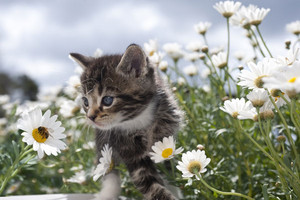 Beautiful kitten