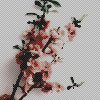 http://images6.fanpop.com/image/photos/41200000/aesthetic-flower-icons-aesthetic-41271844-100-100.jpg