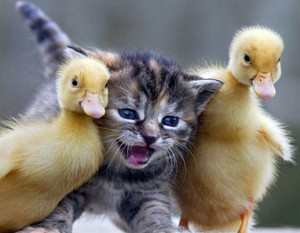 cute kitten and baby ente buddy pic