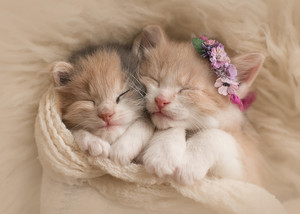 cute mga kuting enjoying a kitty nap