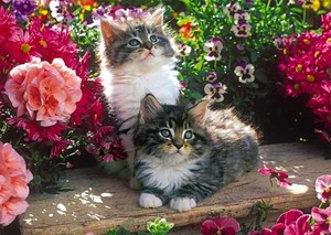 sweet and adorable kitties