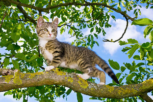Kitten In A árbol