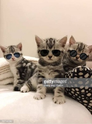 Three Cool Kitties