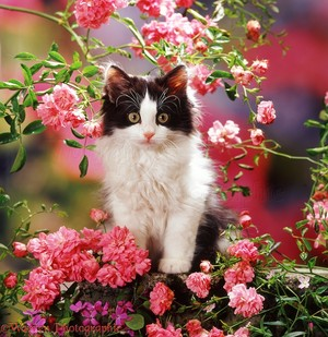 gatitos and flores
