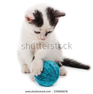kittens playing with yarn