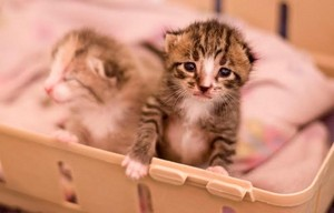 newborn kitties