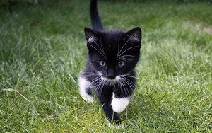 very cute black and white gatitos