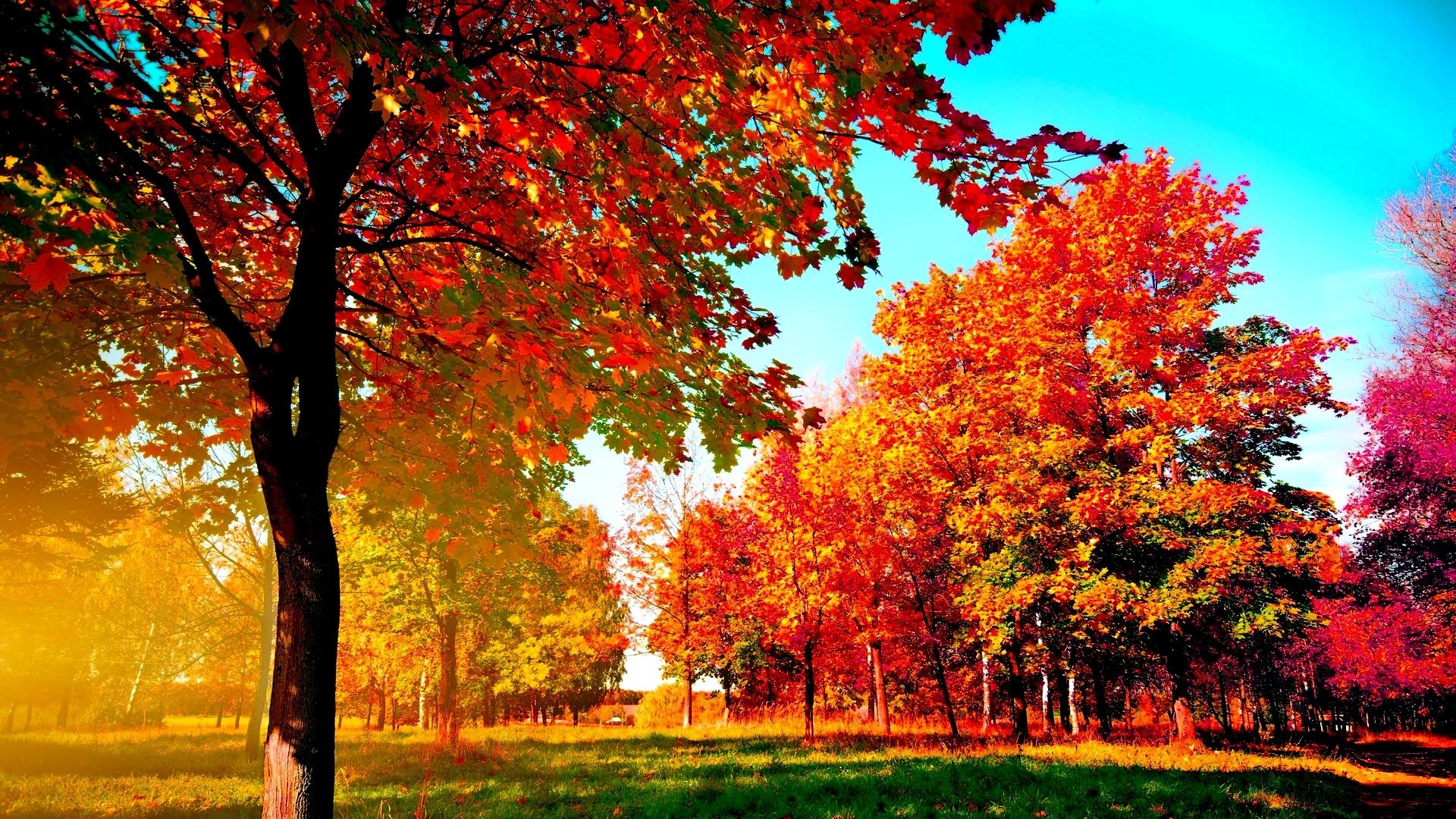 Autumn Trees Manuela Wallpaper 41643616 Fanpop