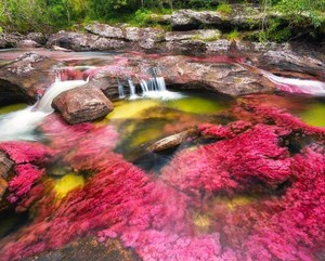 The River of Five Colors, Colombia