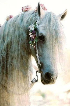 Beautiful Horse 💖