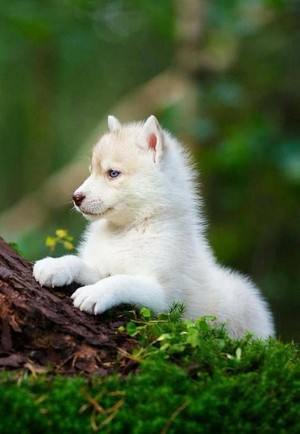 beautiful Dog puppy🌹💖